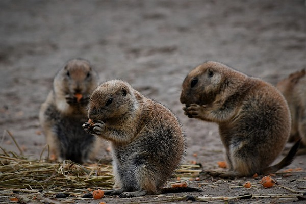 meerkat-wildlands